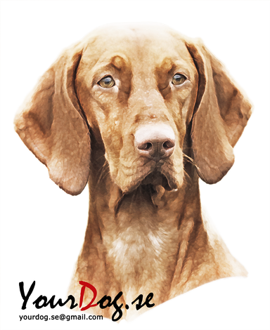 vizsla bag yourdog.se catarina wik  your choice kennel